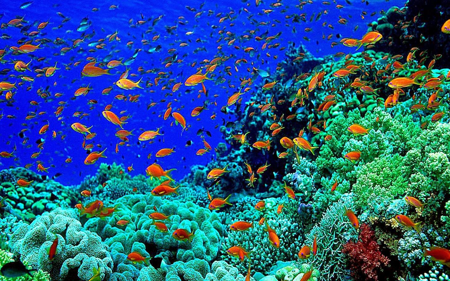 Beautiful Underwater Photography Wallpaper Wallpapers Gallery 1461x913