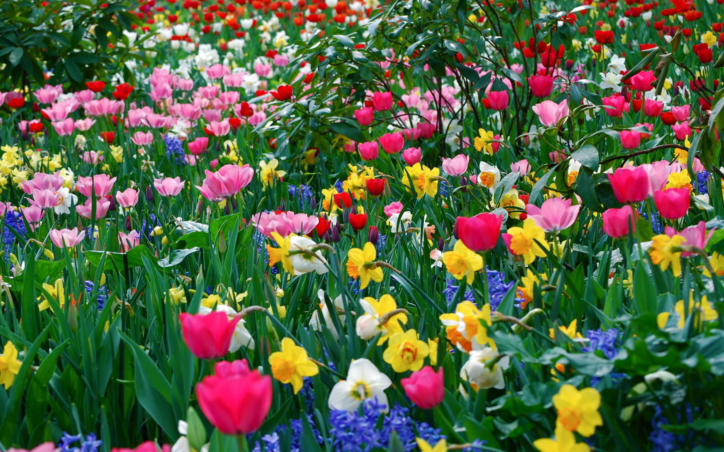many spring spring wallpaper flowers photo 1440x900 flowers 1440x900