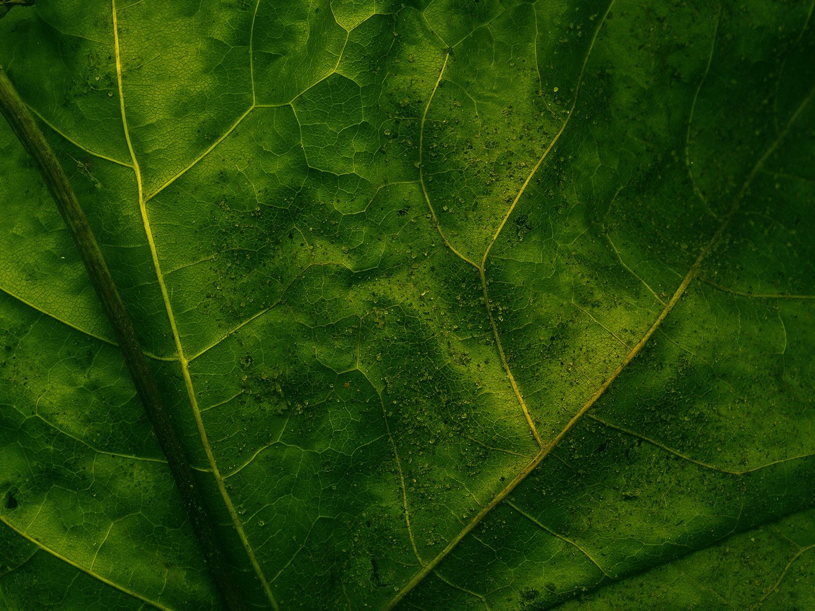 leaf wall paper on Leaf Wallpapers Metal Nature Heavy Metal Wallpapers 1600x1200