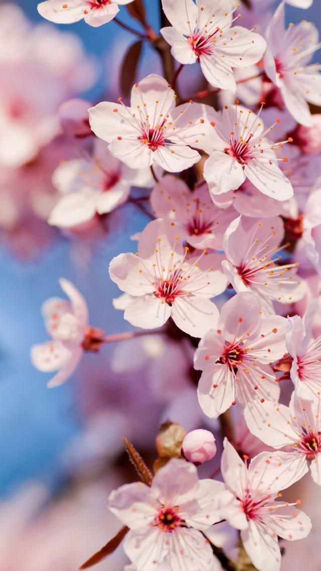 Tumblr Backgrounds Spring Popular Photography 640x1136