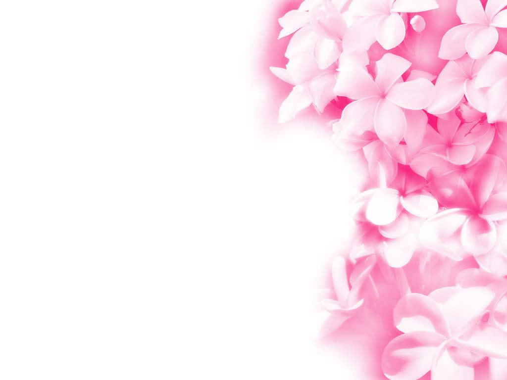 1680x1050px Light Pink Flower Wallpaper 461722