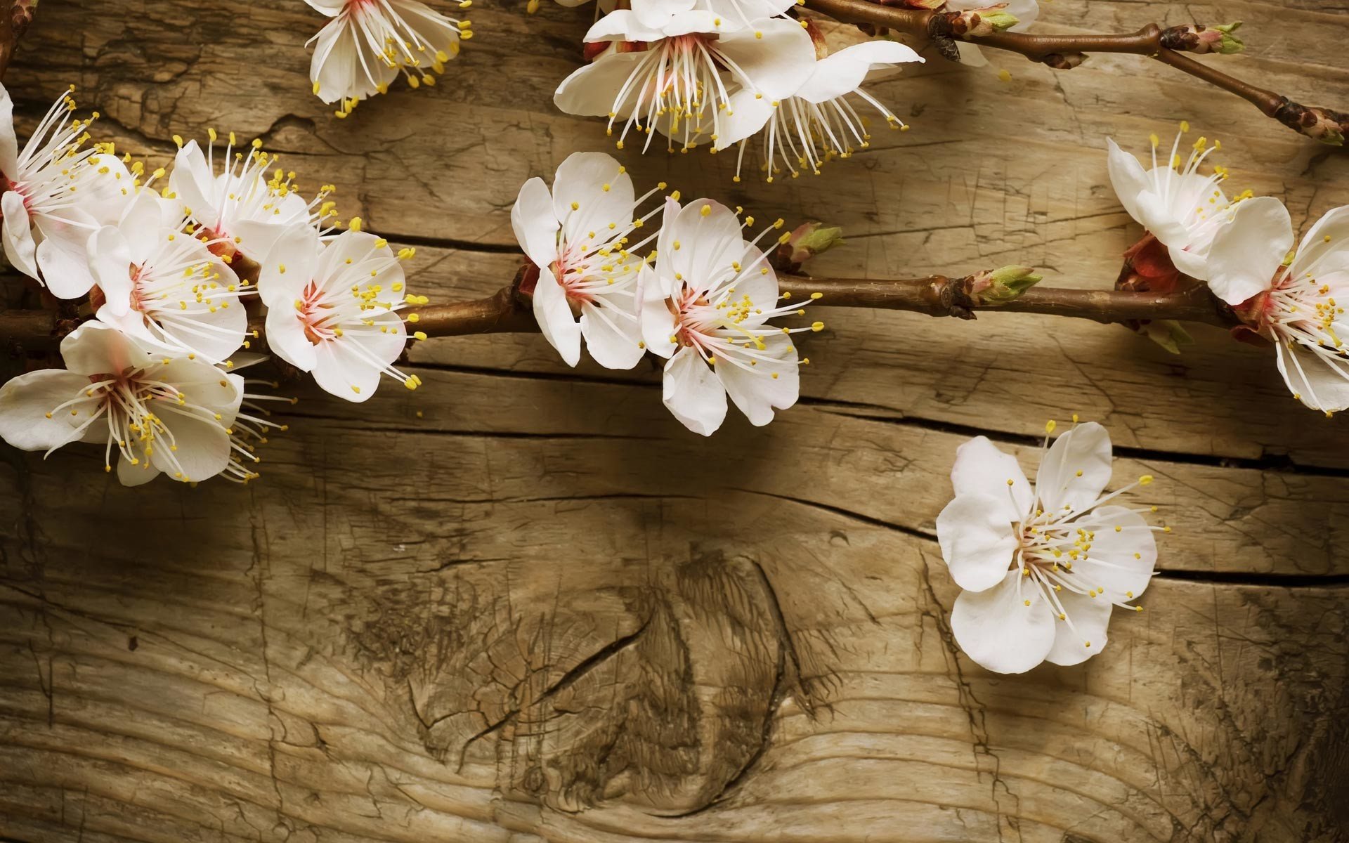 64 Hd Spring Wallpapers on WallpaperPlay 1920x1200