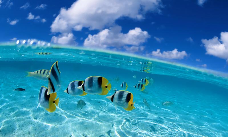 fish 800x480 windows phone wallpaper download 800x480