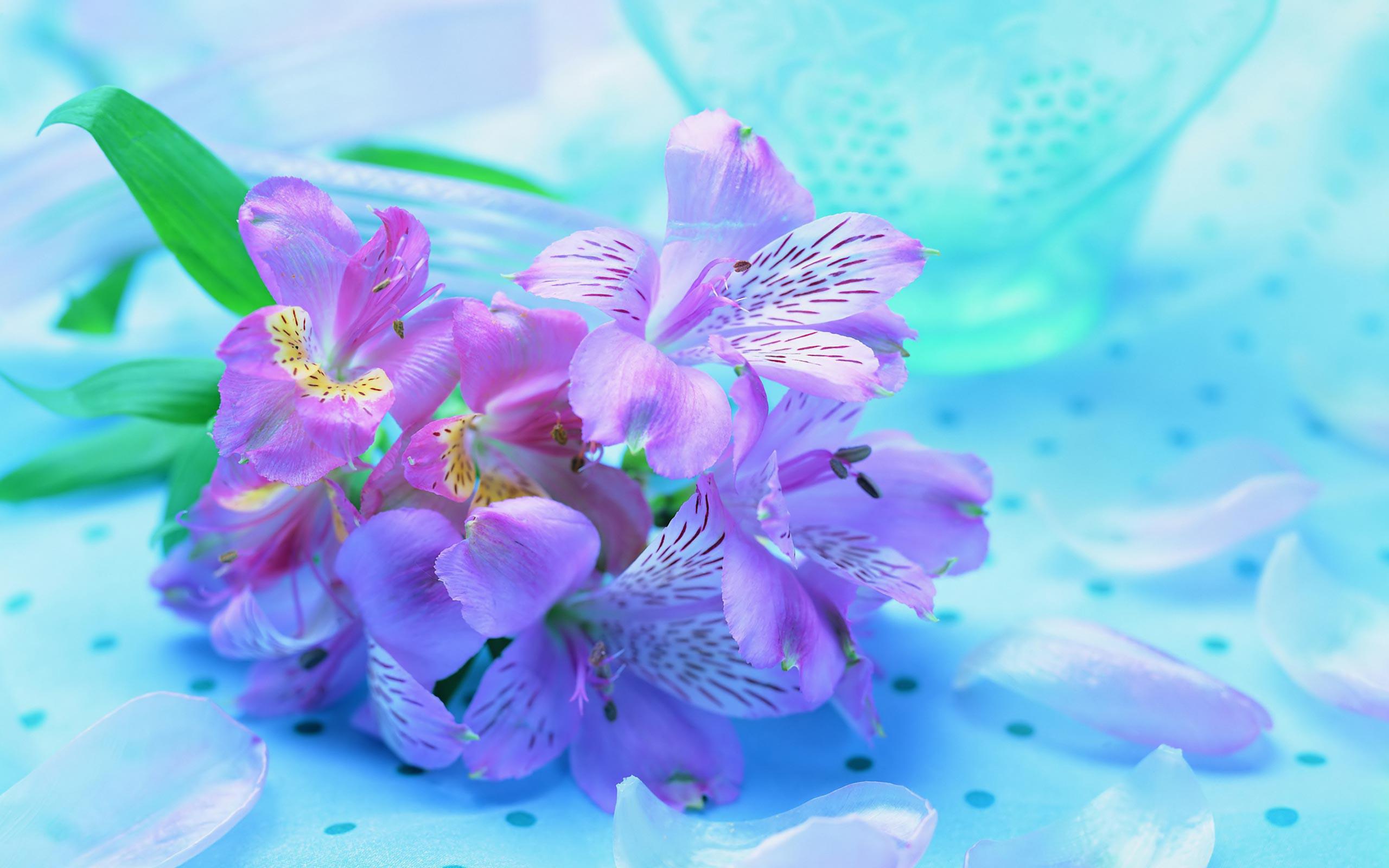 Desktop Wallpaper Flowers 2560x1600