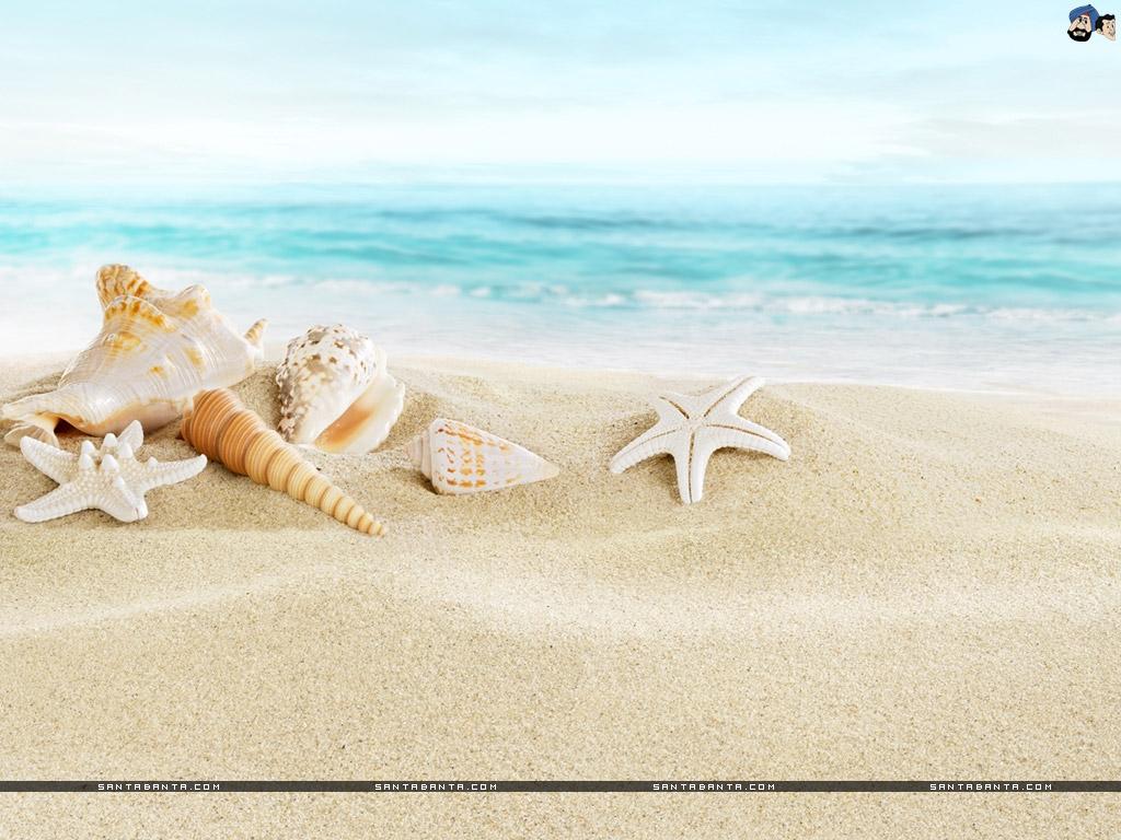 Seashells Wallpaper Wallpapersafari