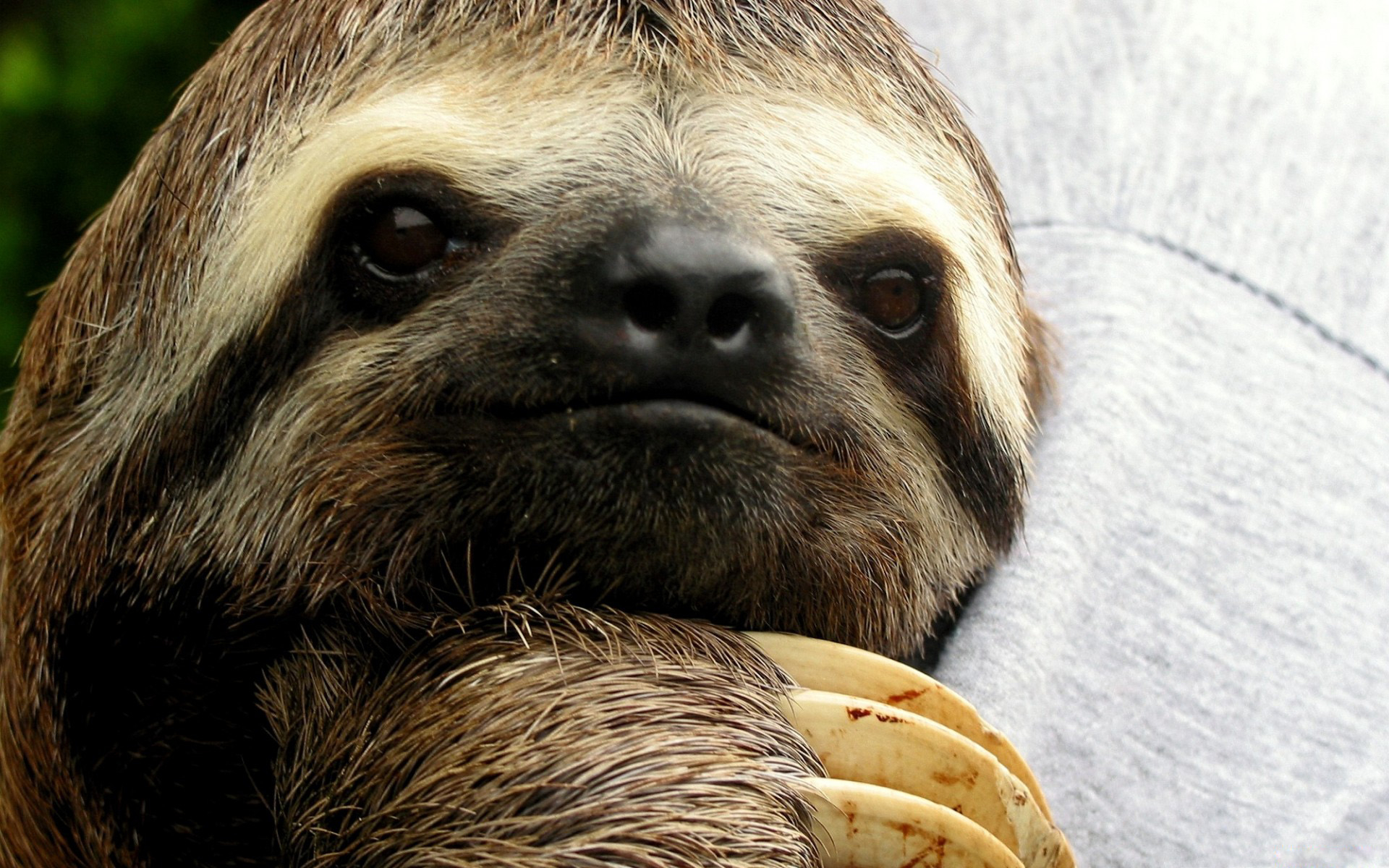Sloth wallpapers and images   wallpapers pictures photos 1920x1200