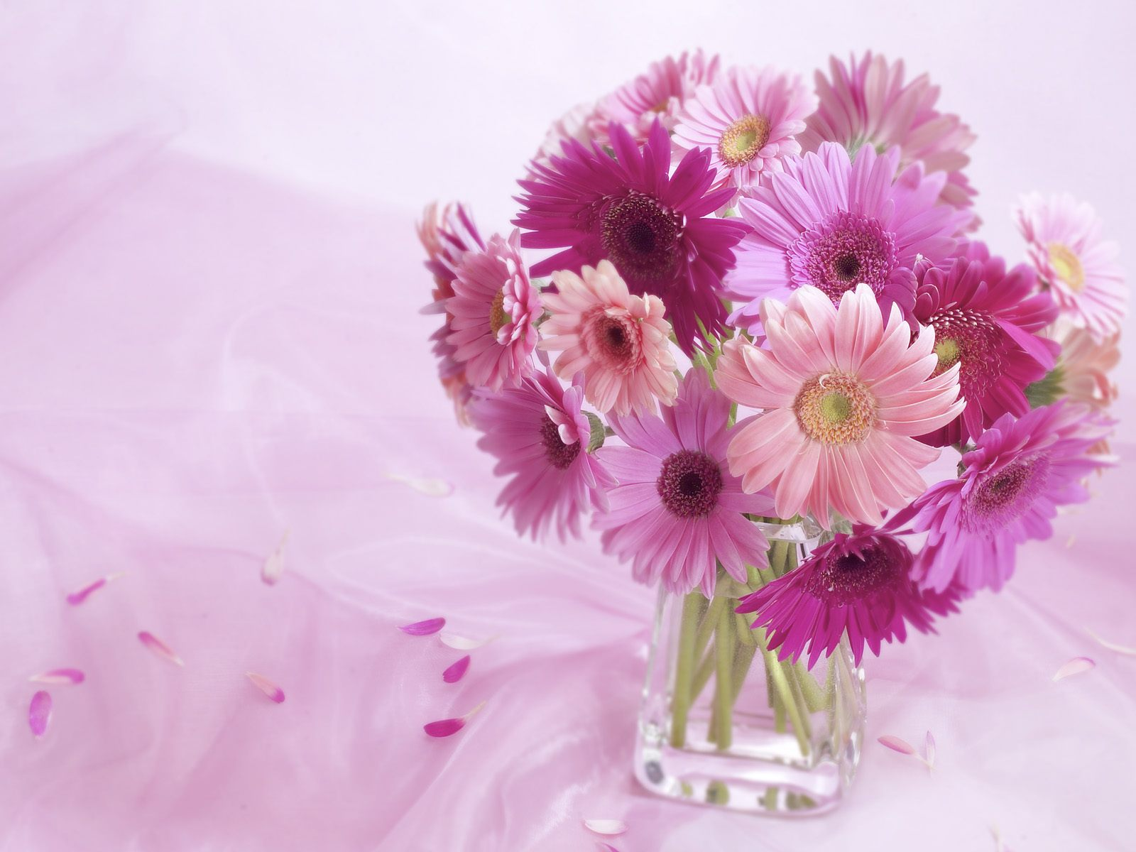 Gerbera Daisy Arrangement Wallpapers HD Wallpapers 1600x1200