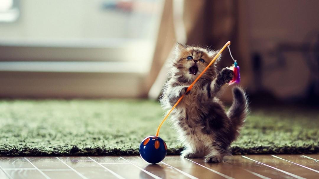 Funny Cat Facebook Pictures HD Wallpaper HD Wallpaper of 1080x607