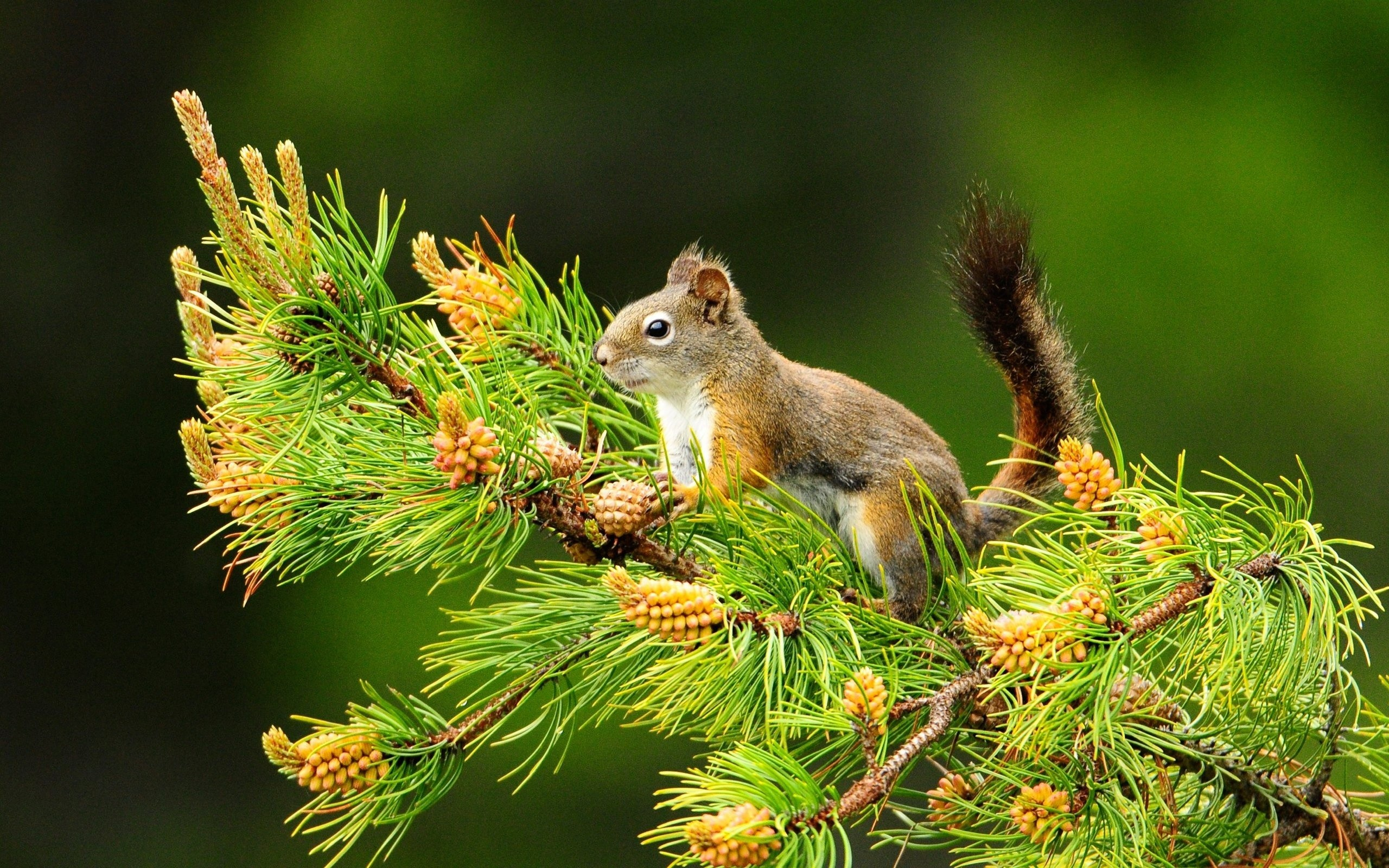 Nature Animals HD Wallpapers 2014 2560x1600