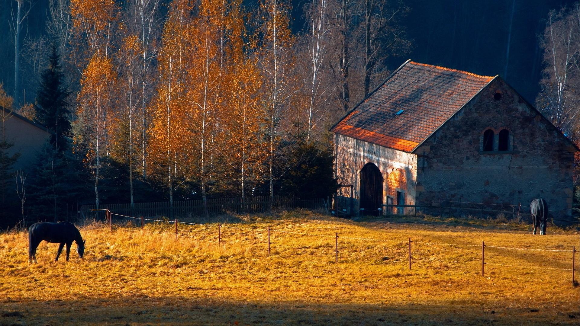 farm barn landscapes buildings autumn fall trees wallpaper background 1920x1080