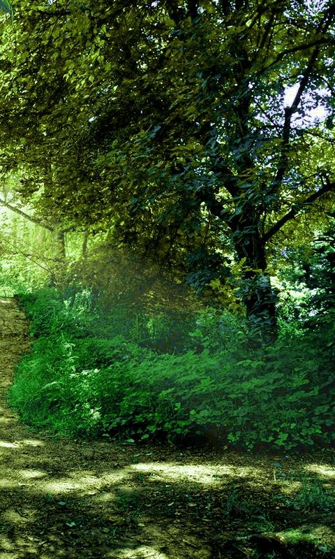 Nature Phone Wallpapers - WallpaperSafari