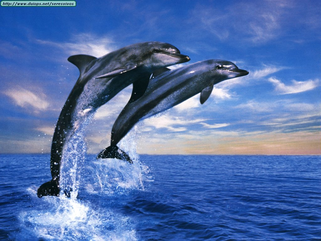 Free Download Christianhdwallpaper Dolphin Wallpapers