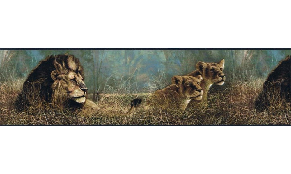 Home Animal Borders Wild Cats Animals Wallpaper Border B76462 1000x600