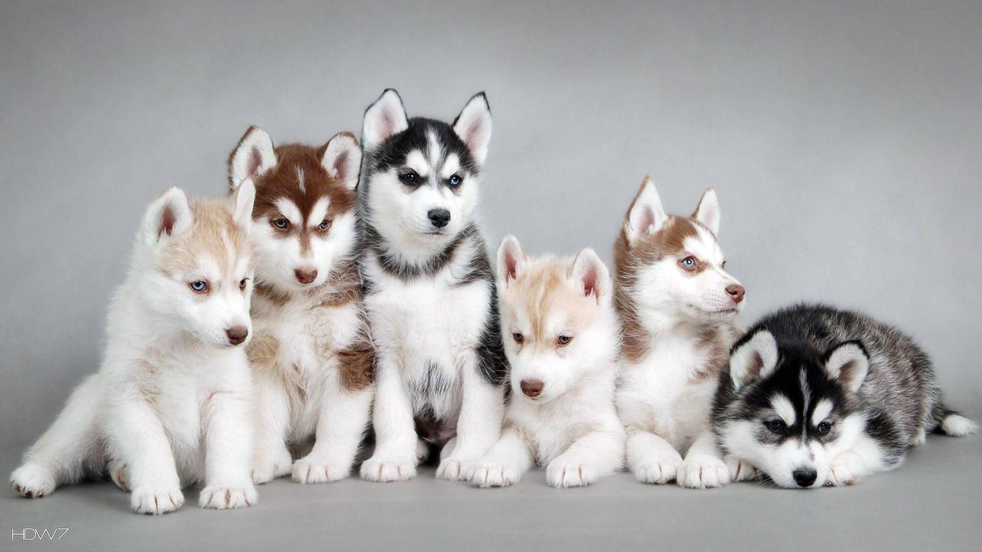 Puppies In Snow Wallpaper Wallpapersafari