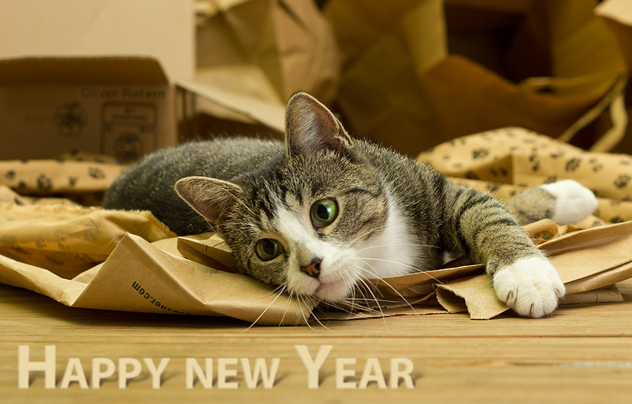 Free download Happy New Year Cat Wallpaper Happy New Year 2014 by