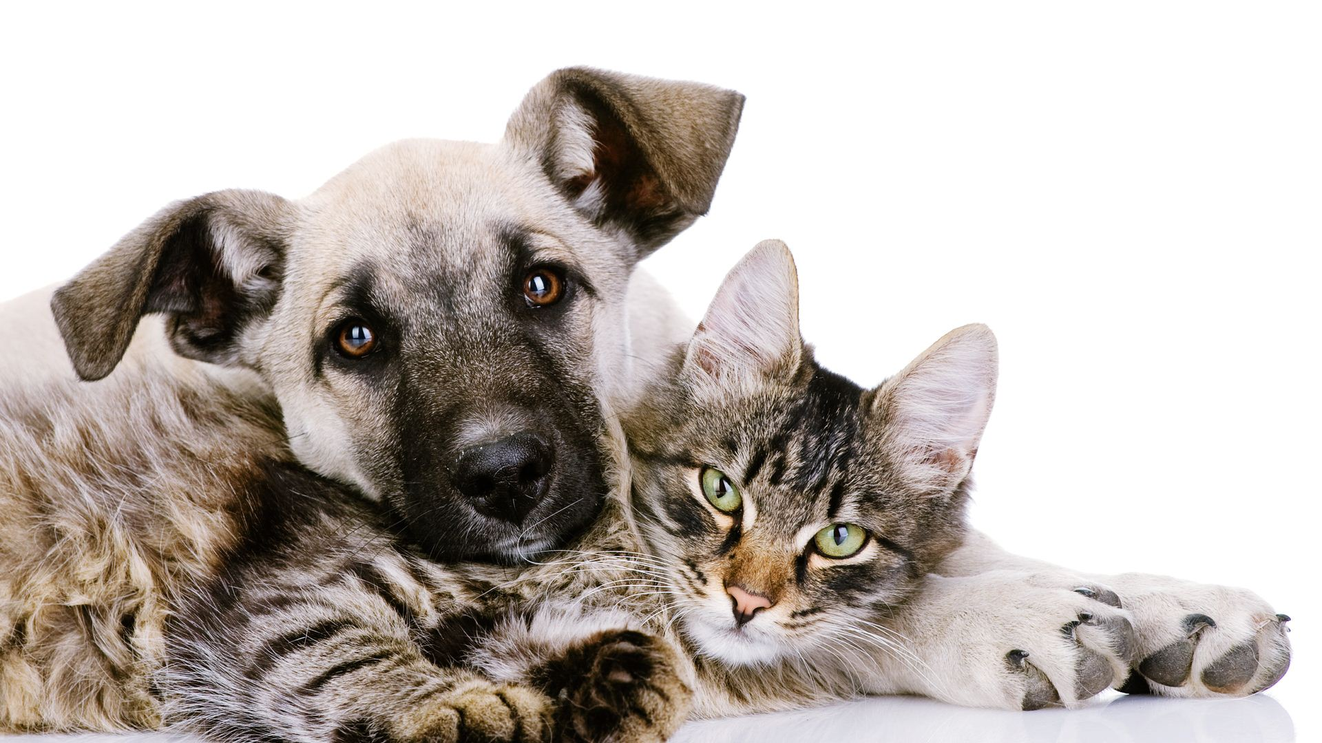 Cat And Dog Wallpapers High Quality Download 1920x1080