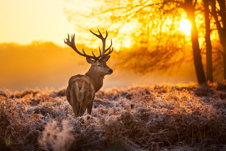 Deer Desktop Wallpapers   Top Deer Desktop Backgrounds 4960x3307