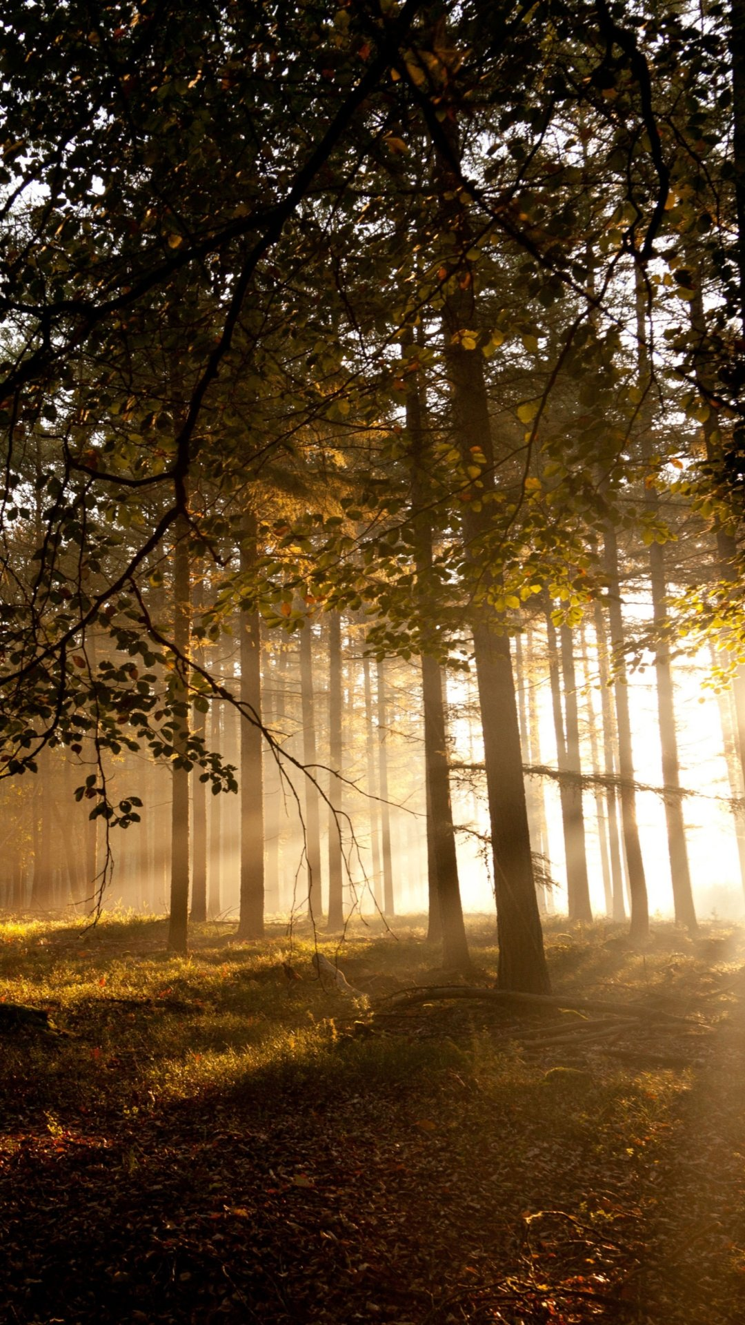 Free Download Mystical Forest Samsung Wallpaper Download Samsung