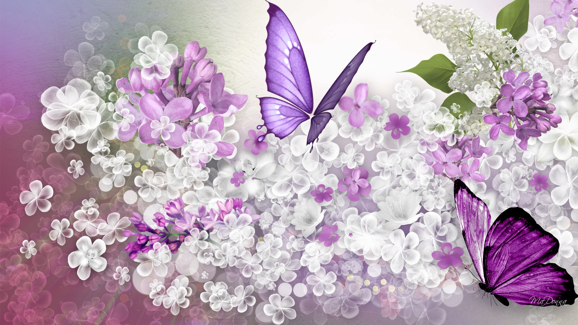 Lilac Flowers Windows 81 Theme and Pictures All for Windows 10 1920x1080