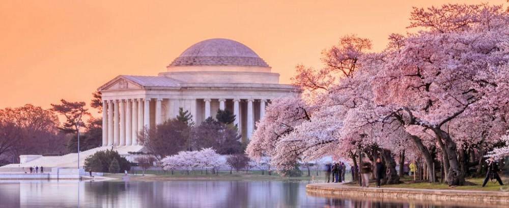 dc 2015 cherry blossom festival washington dc national cherry blossom 1000x409