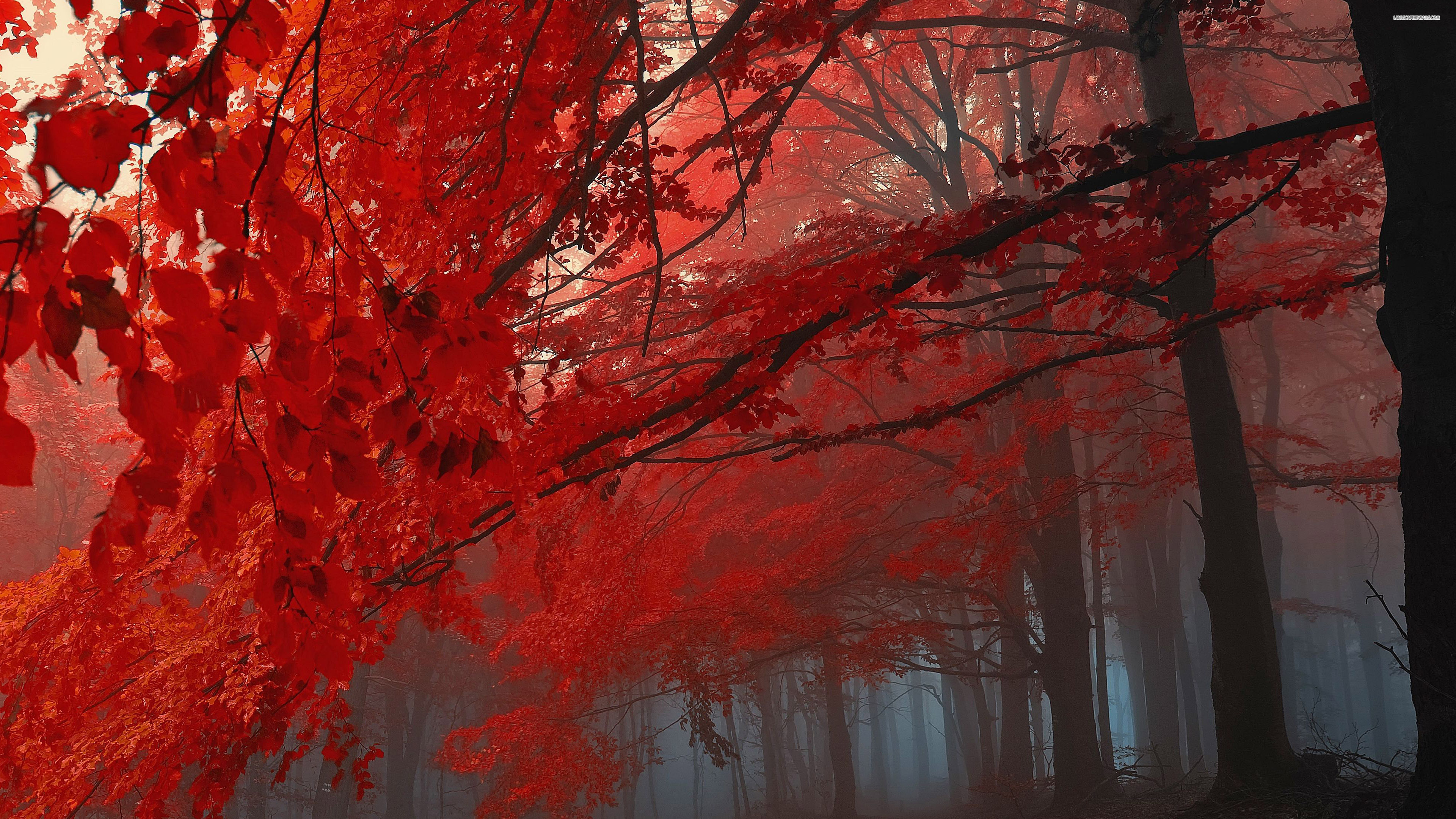 red fall wallpaper - photo #16