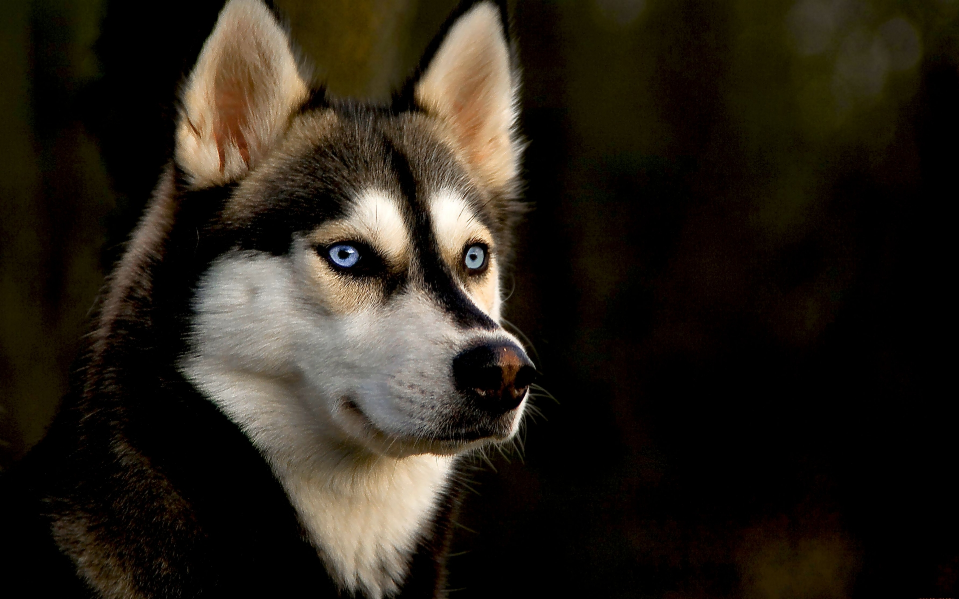 Dogs Wallpapers HD Pictures One HD Wallpaper Pictures 1920x1200