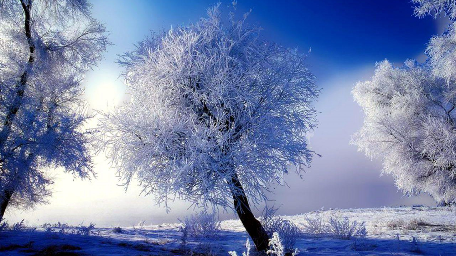 Winter Scene Wallpaper 6537 Wallpapers13com 1920x1080