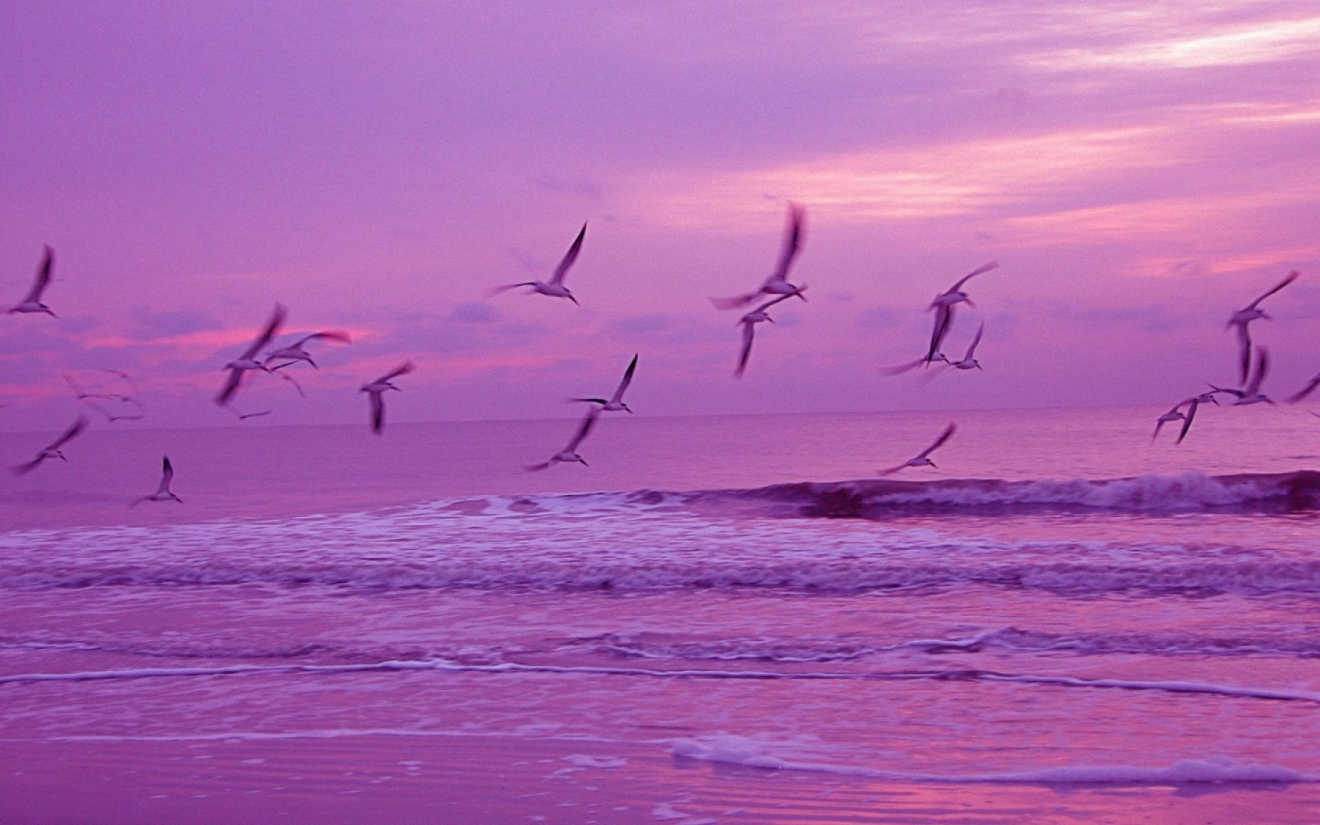 birds flying wallpaper 1920x1200 1920x1200