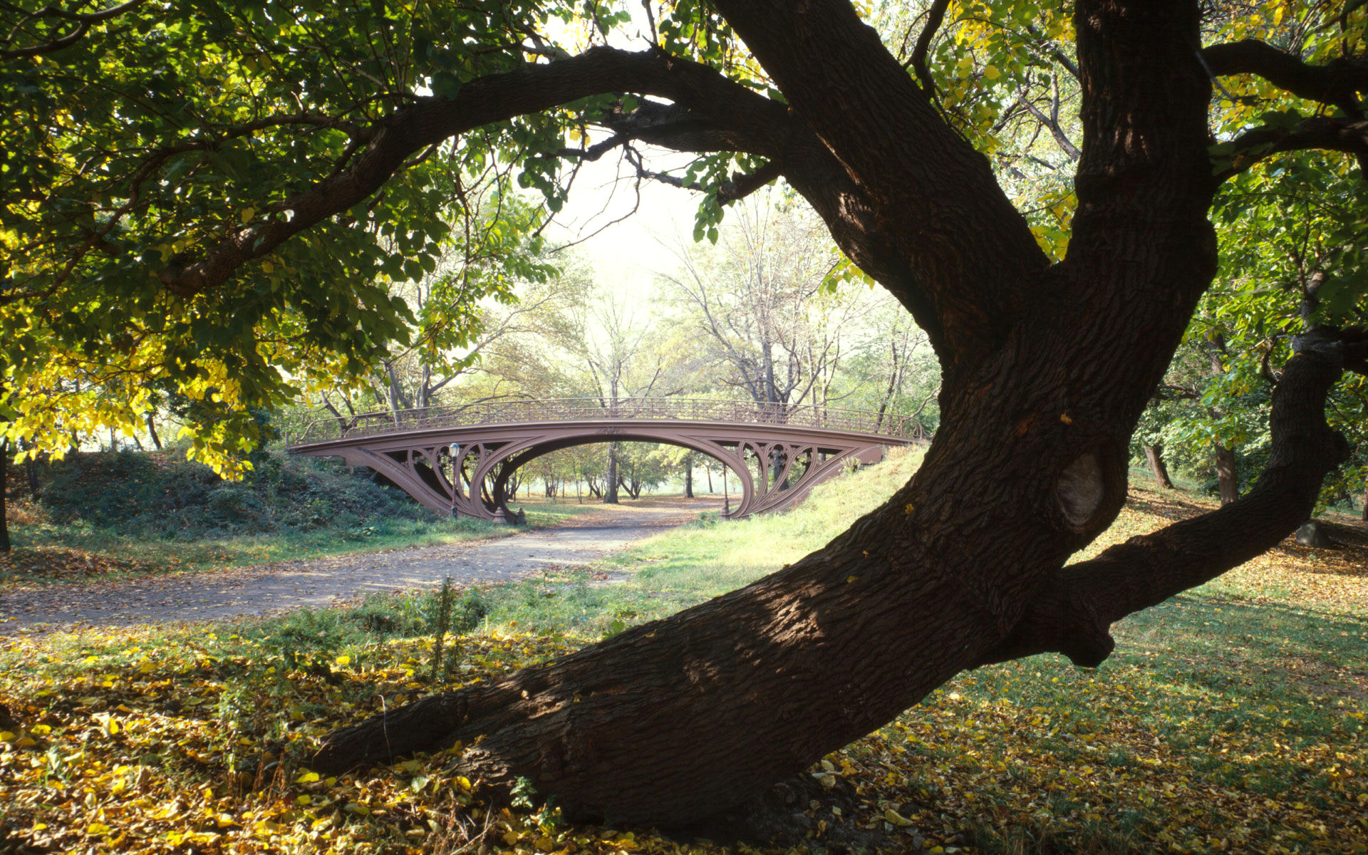 Theme Bin Blog Archive Central Park New York City HD Wallpaper 1920x1200