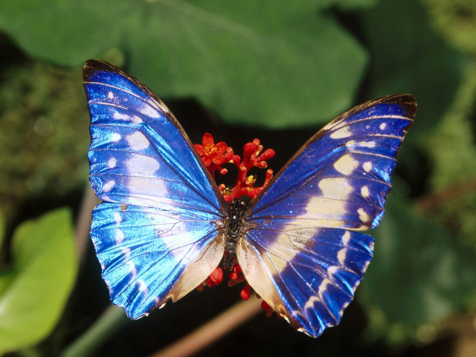 Beautiful Butterflies   Butterflies Wallpaper 9481720 1600x1200