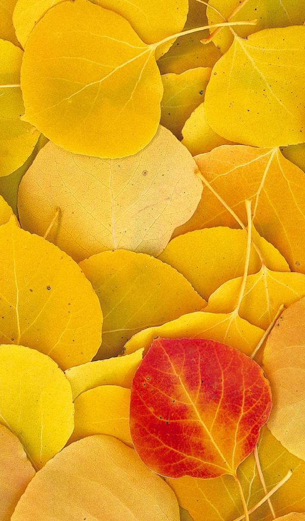 leaf autumn yellow HD Wallpaper   General 331989 600x1024