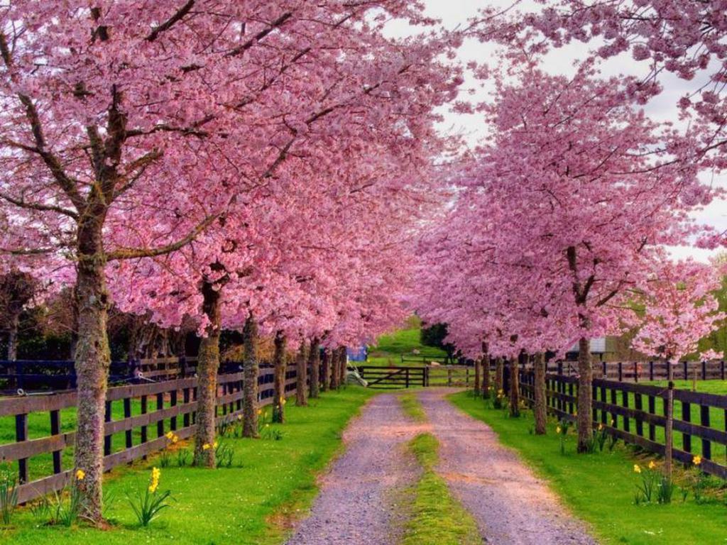 Spring Screensavers Wallpapers 1024x768