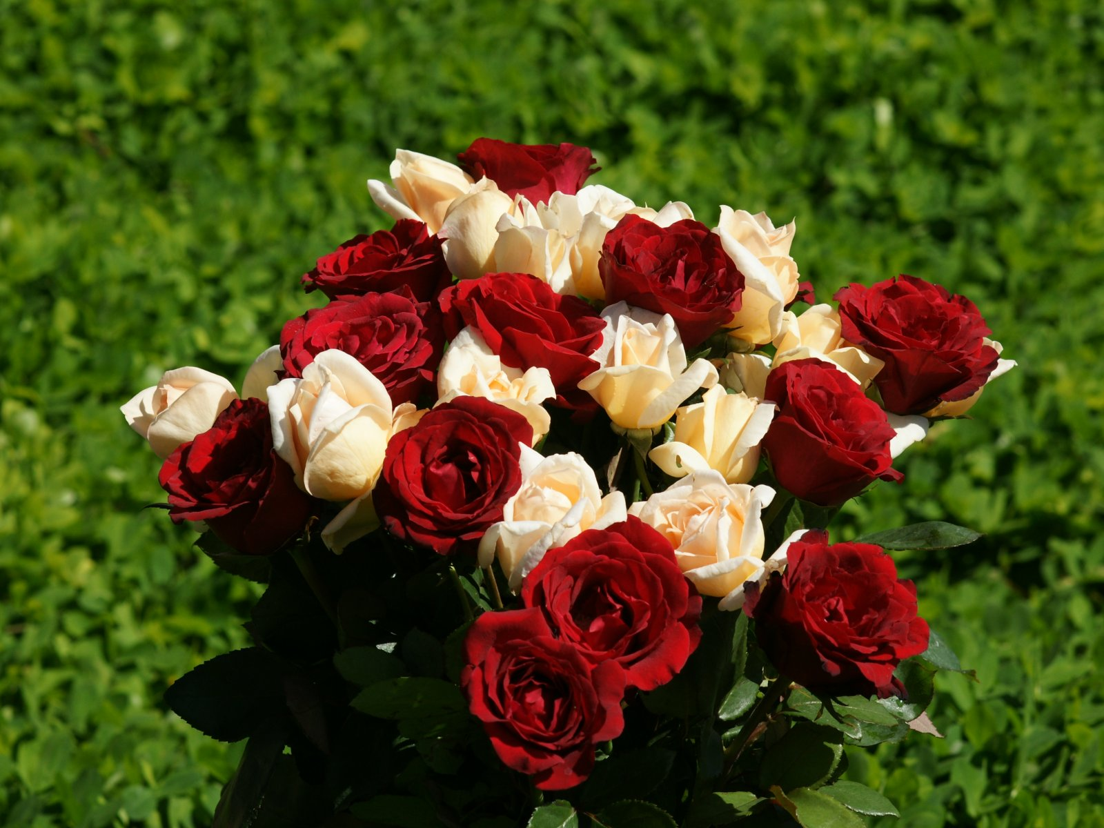 roses wallpapers hd rose wallpaper 21 bundle of red and white roses 1600x1200