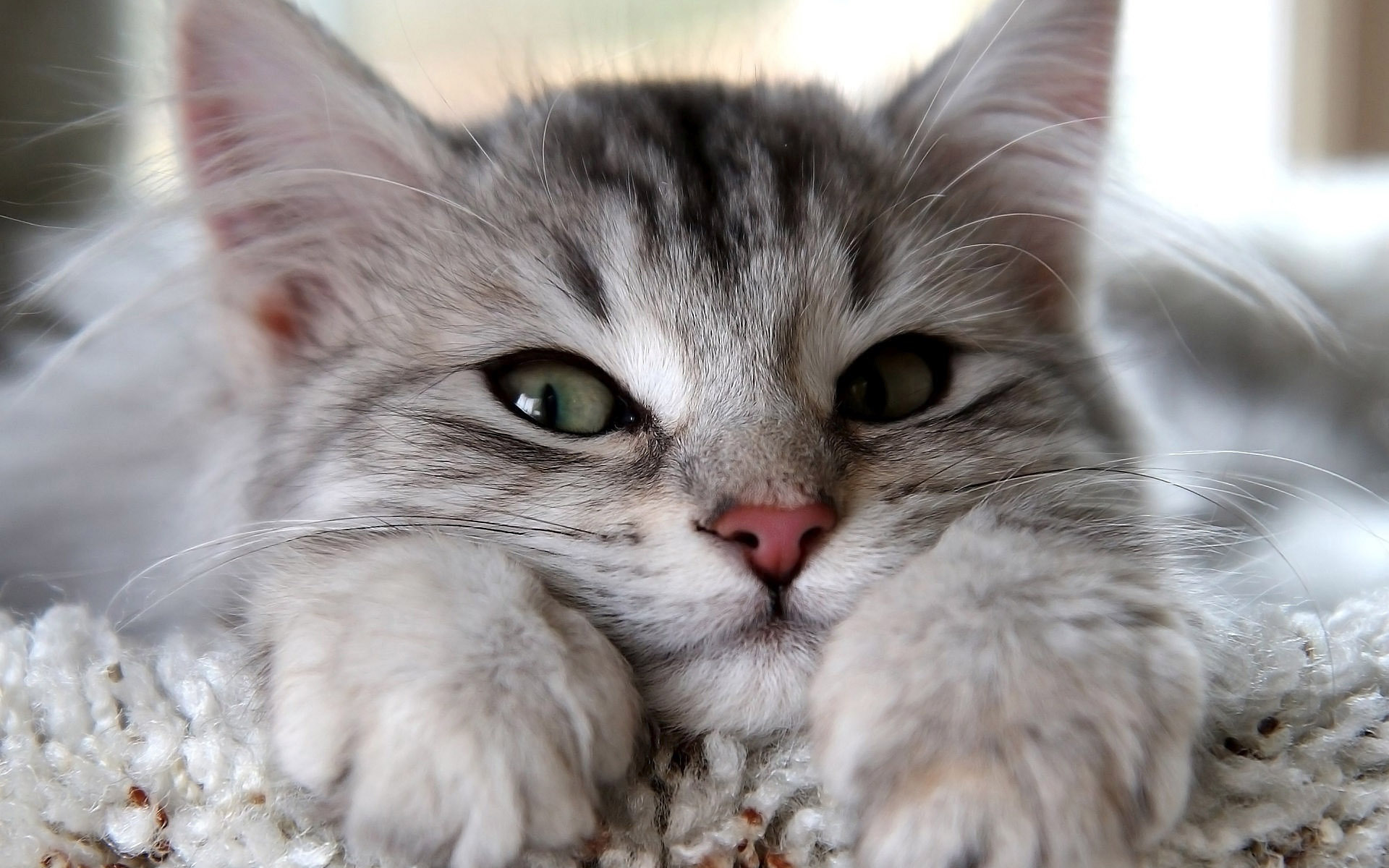 Sleepy kitten wallpaper
