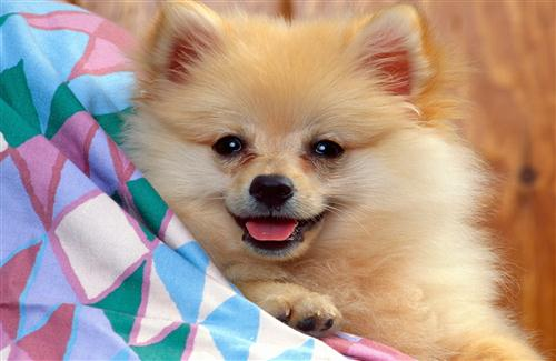 Cute Puppy Wallpapers Download HD Wallpapers 500x325