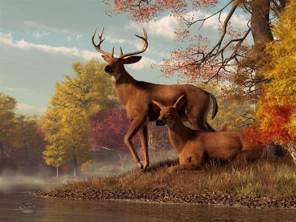 Fall Wallpaper With Deer