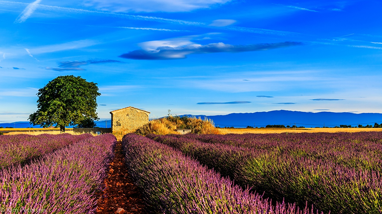 Pictures Provence France Nature Sky Fields lavender Landscape 1280x720