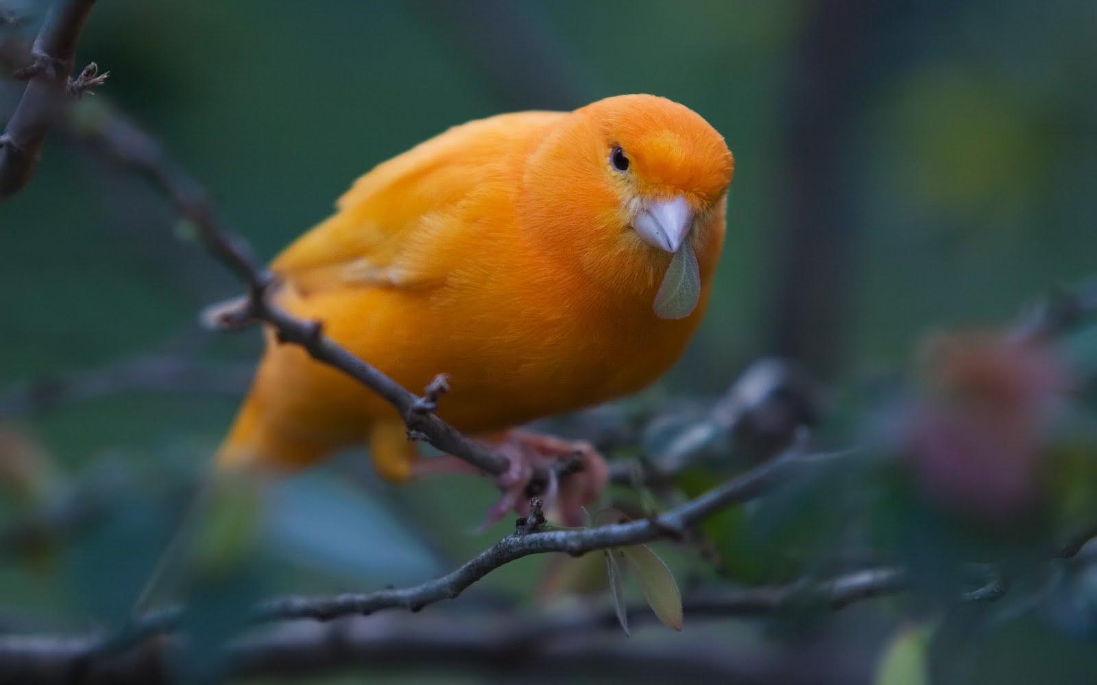 Animals blogs 7 Beautiful Birds Wallpapers for Beautiful Desktop 1600x1000