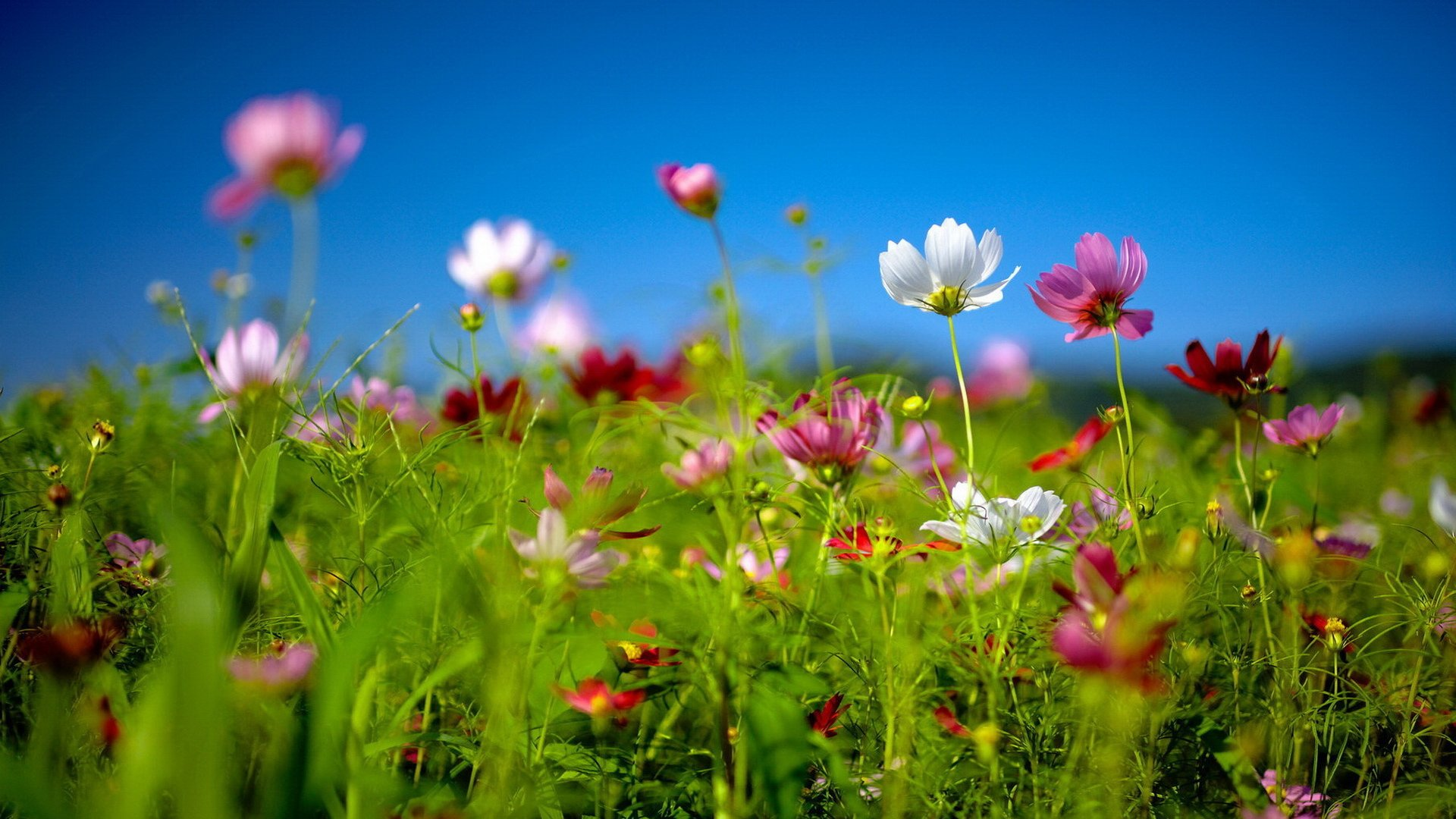 Spring wildflowers Best HD Windows 81 Theme 1920x1080