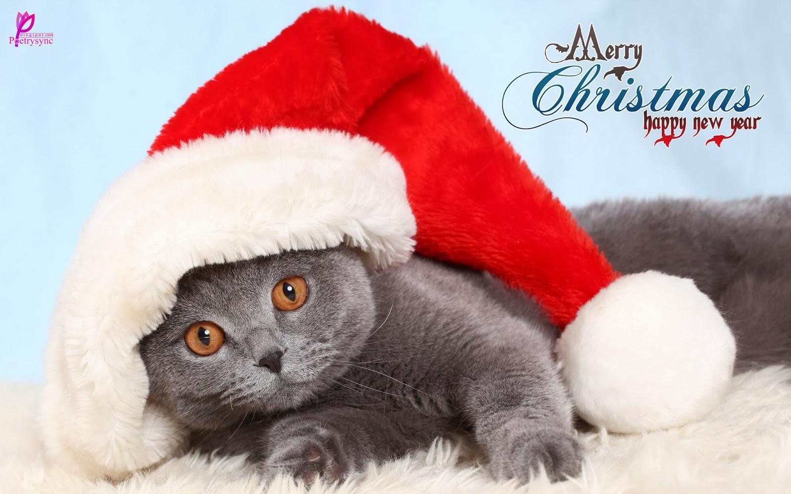 47+ Cute Merry Christmas Wallpaper on WallpaperSafari