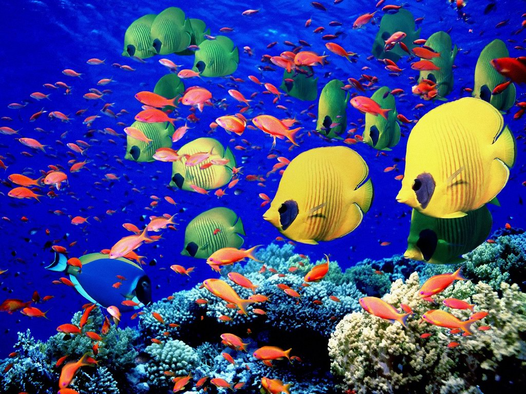 Beautiful Fish Blue Sea Hd Wallpaper Wallpapers Desktop Backgroud 1024x768