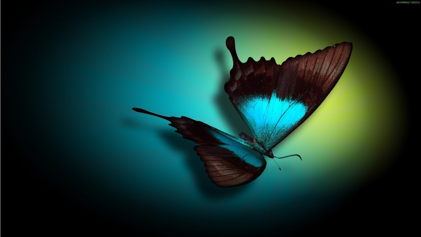 Teal Butterfly HD Wallpaper 1366x768