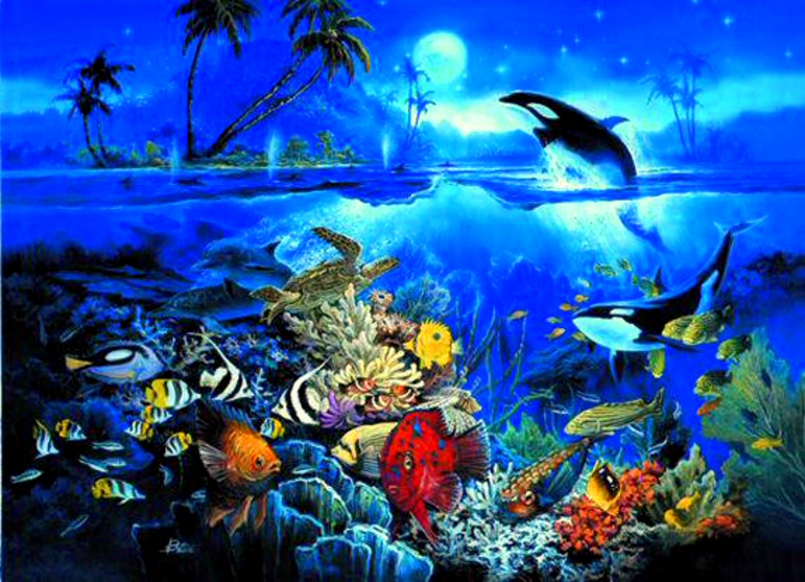 Underwater Ocean Backgrounds HD wallpaper background 1600x1157
