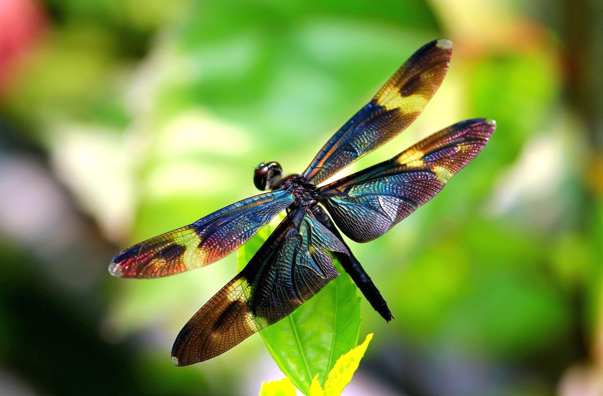 Pics Photos   3d Dragonfly Hd Wallpapers 2048x1345