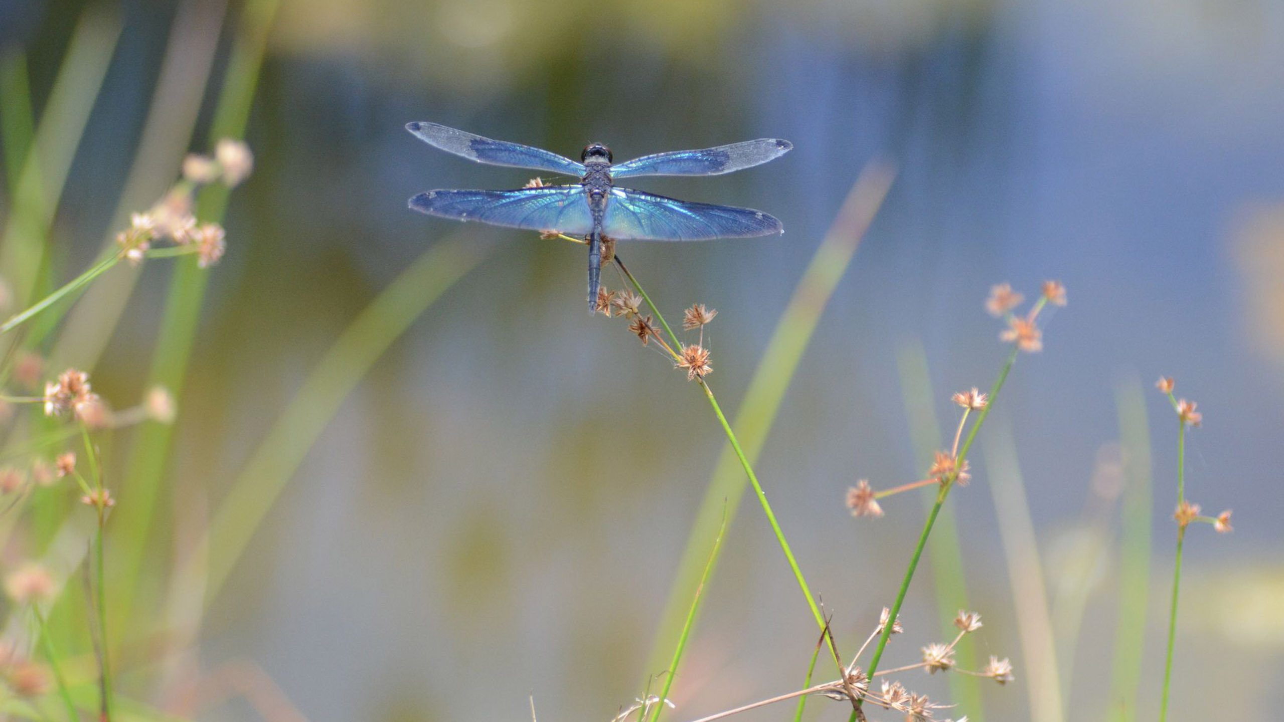 Dragonfly Backgrounds Download 2560x1440