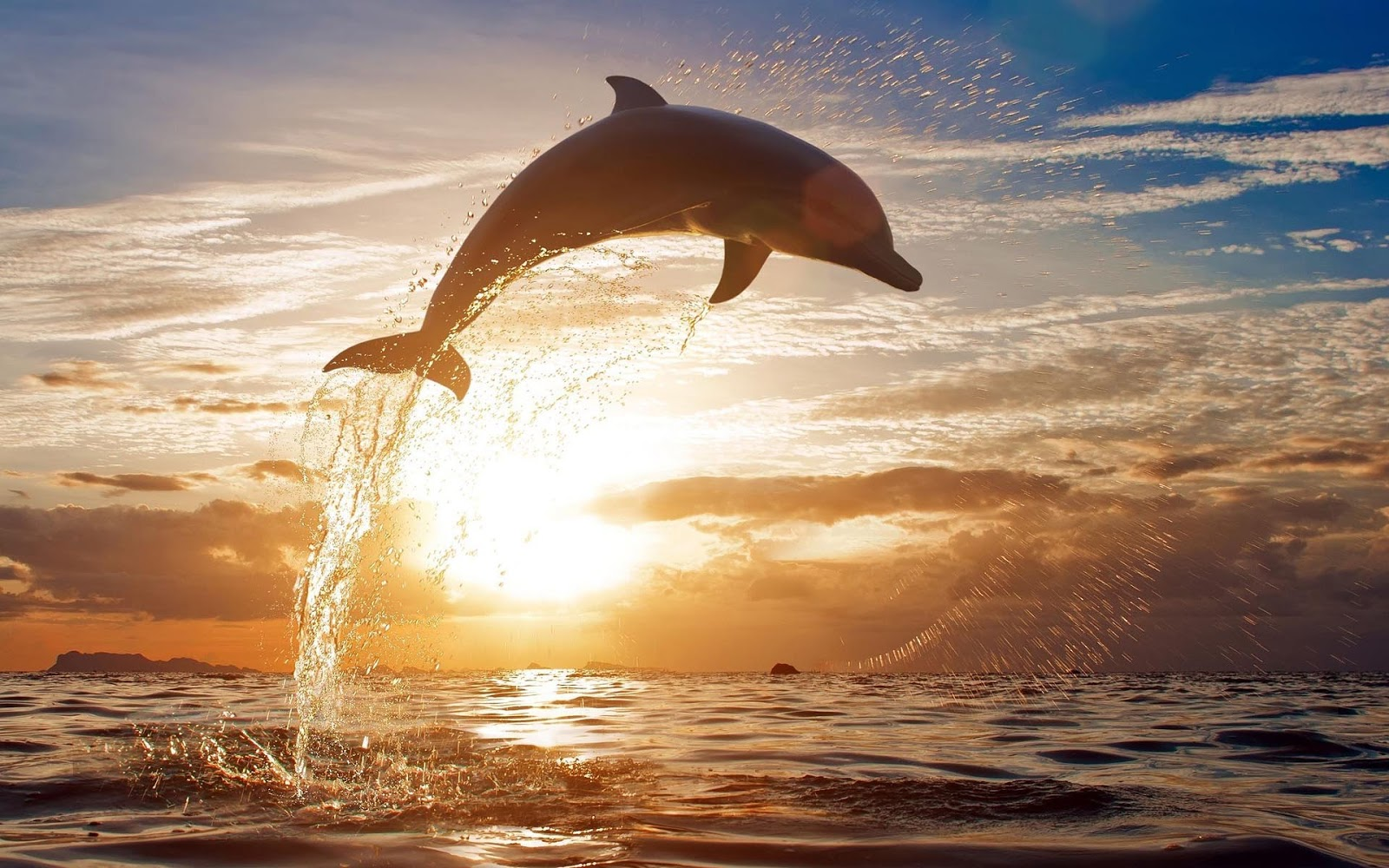 Dolphin Backgrounds wallpaper Dolphin Backgrounds hd wallpaper 1600x1000