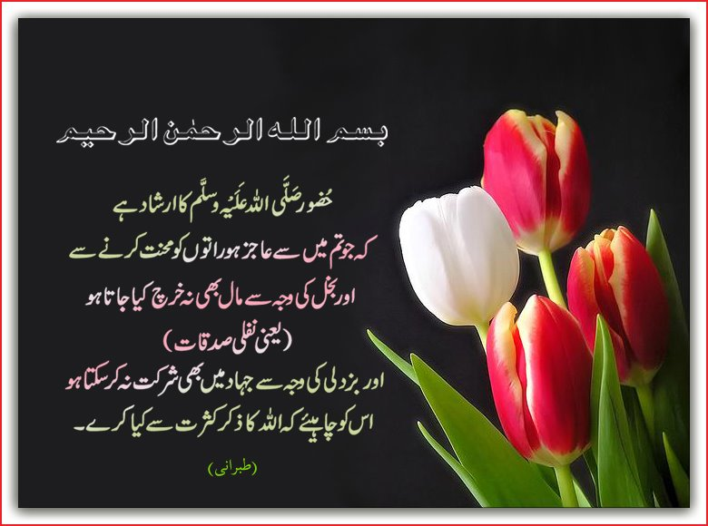 Islamic Urdu Wallpapers   Islamic Blog   Articles On Islam Quran 780x580