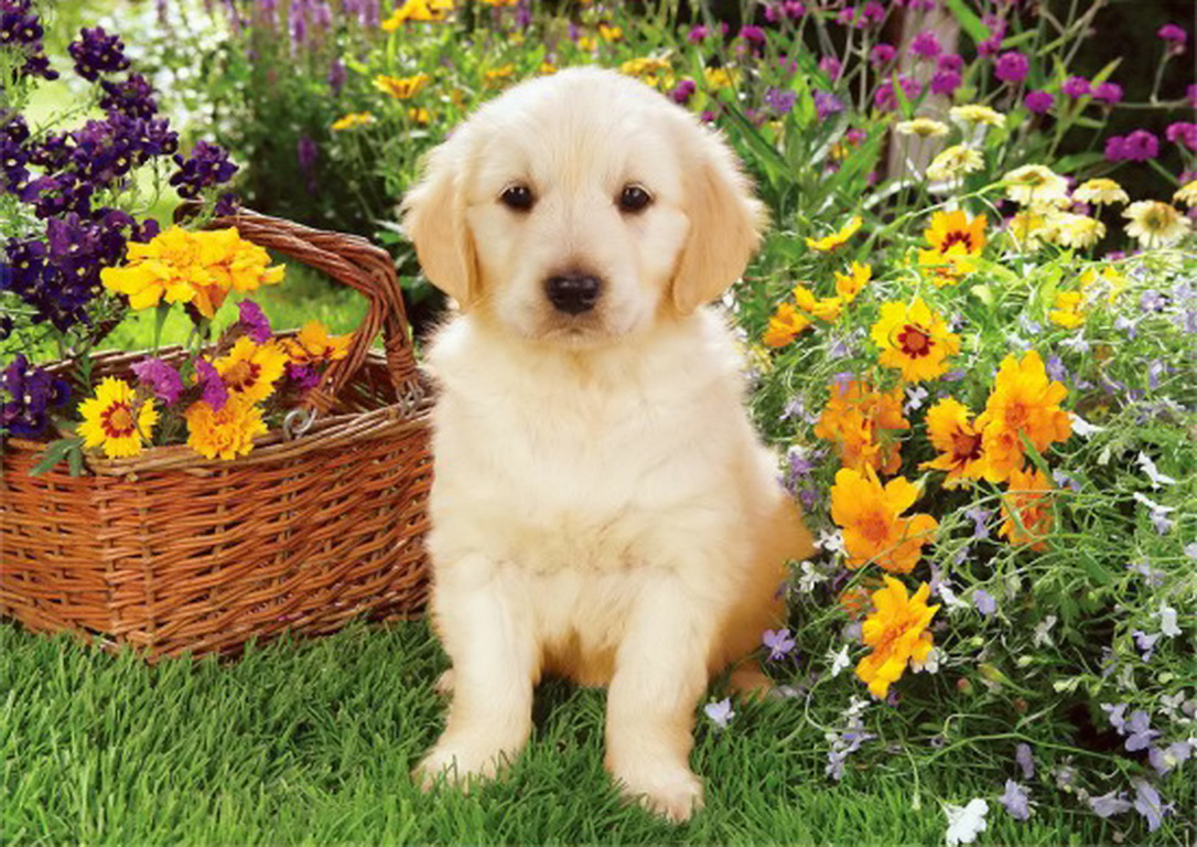 animals dog wallpaper free - photo #39