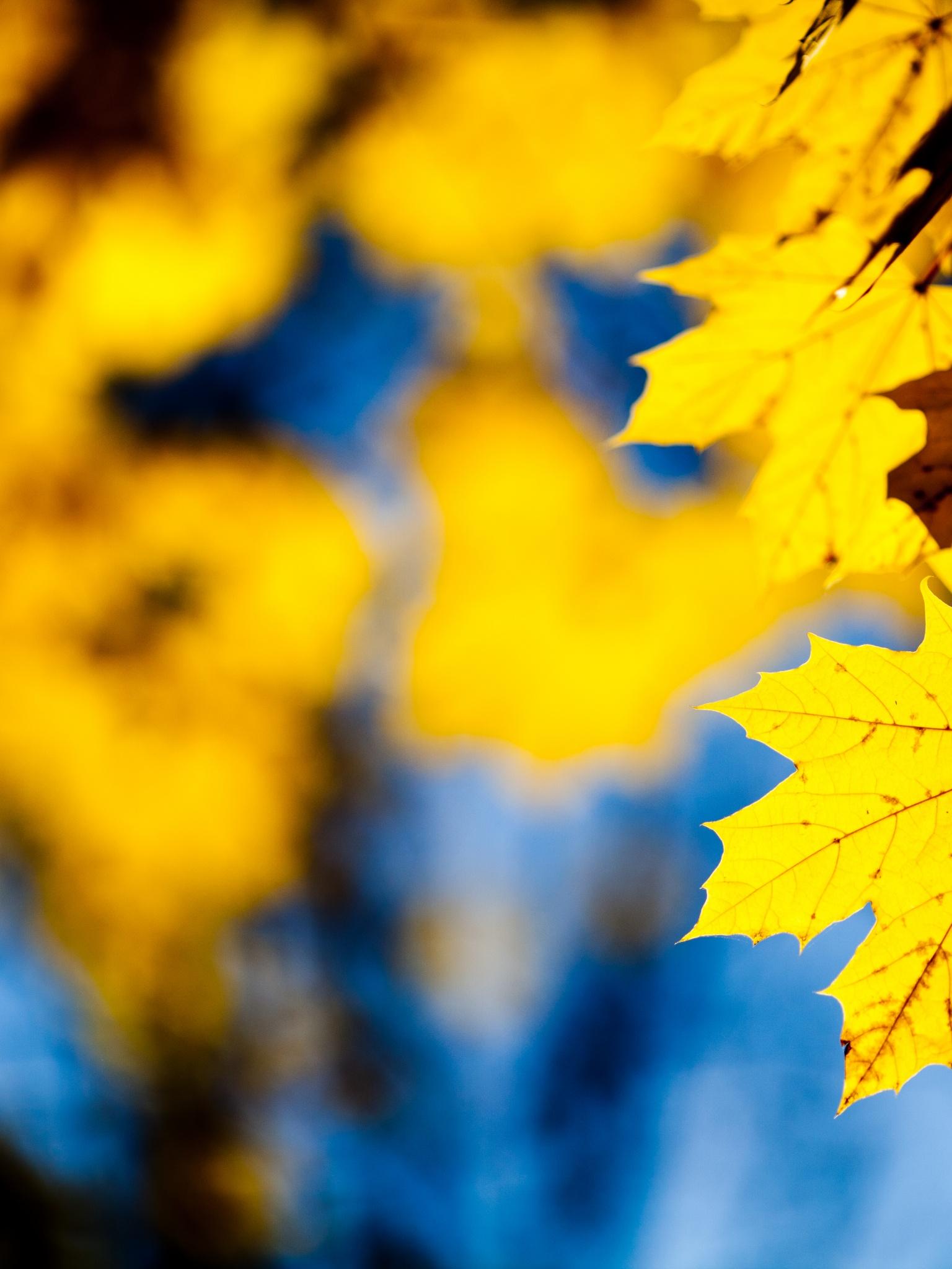 1536x2048 Yellow leafs Ipad 4 wallpaper 1536x2048