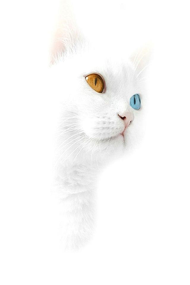 Cute Kitten Iphone Wallpaper Wallpapersafari